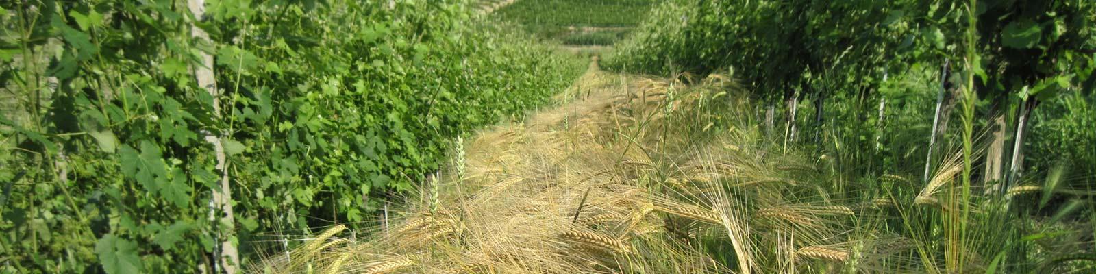 Biodiversita - Azienda Agricola Negro Angelo e Figli