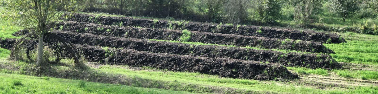 Lombricoltura - Azienda Agricola Negro Angelo e Figli